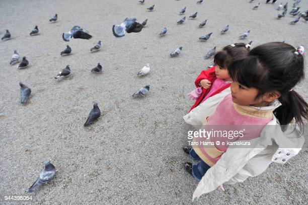 The girls watching many pigeons in Japan