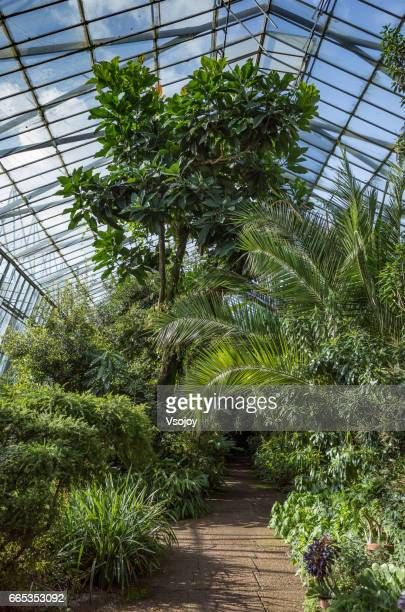 the glasshouse at royal botanic garden, edinburgh - botanical garden stock pictures, royalty-free photos & images