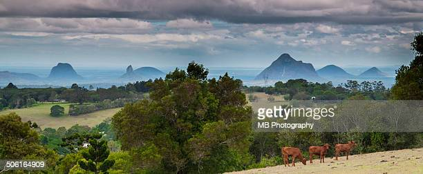 the glasshouse mountains - glass house mountains stock pictures, royalty-free photos & images