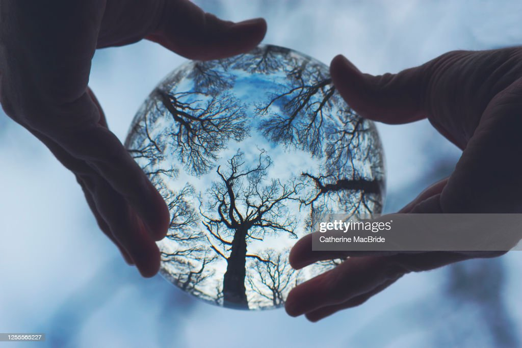 The Global Forest : Stock Photo
