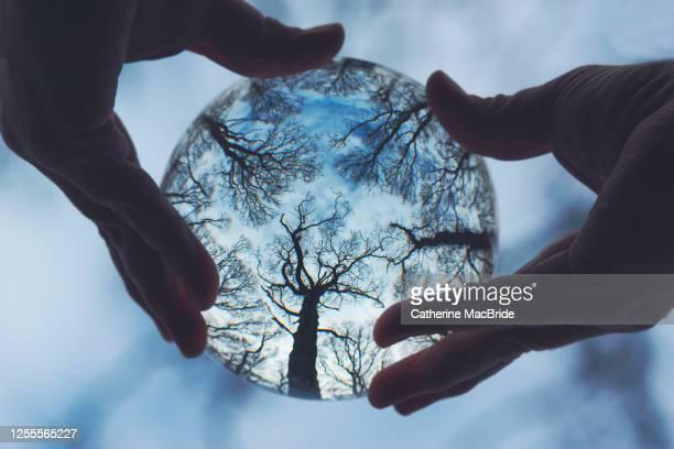 the global forest - catherine macbride fotografías e imágenes de stock