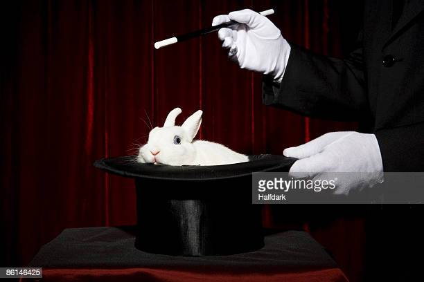The gloved hands of a magician performing a magic trick with a rabbit in a top hat