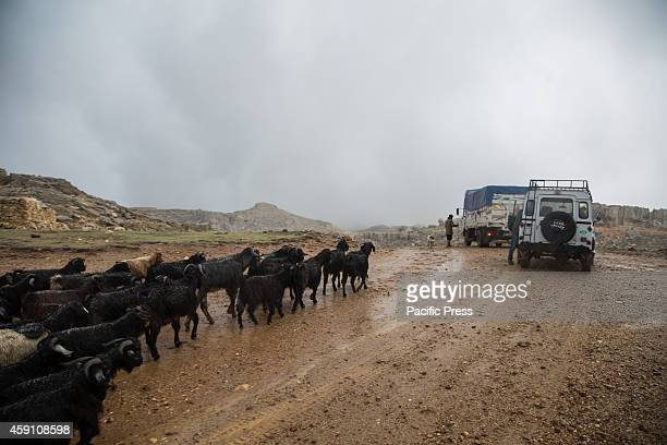 The goats herd of Yoruk shepherd Refik Ogan cross the mountain pass between the Taurus Mountains and the Anatolian Mediterranean coast during the...