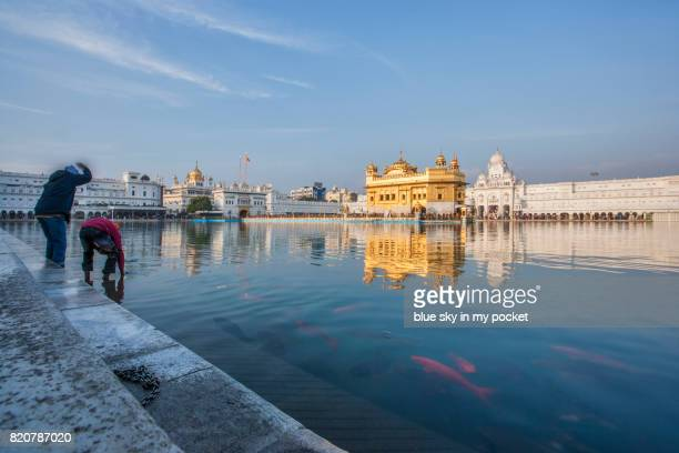 the golden temple at amritsar - golden temple india stock photos and pictures