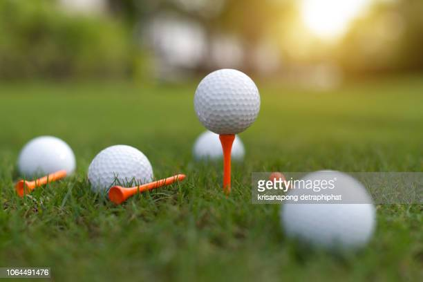 the golf ball is on the green,golf,golf ball on grass, - golfe imagens e fotografias de stock