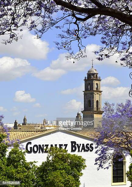 the gonzalez byass sherry house and tower of the cathedral of jerez - jerez de la frontera fotografías e imágenes de stock