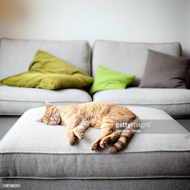 the good life - feline stock pictures, royalty-free photos & images