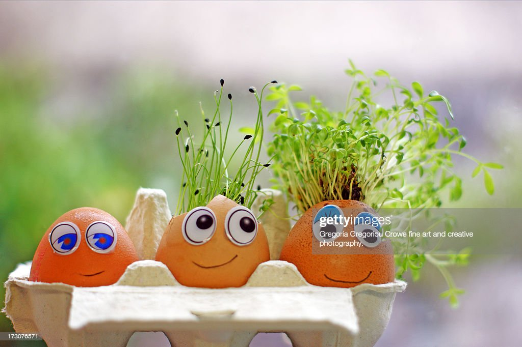 The good the bad and the egg-ly... : Stock Photo