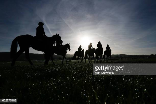 The Gordon Elliott string make their way to the gallops as morning dew sits on the grass prior to the upcoming Cheltenham festival starting on...
