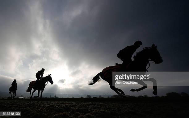 The Gordon Elliott string on the gallops at Cheltenham racecourse on March 14 2016 in Cheltenham England