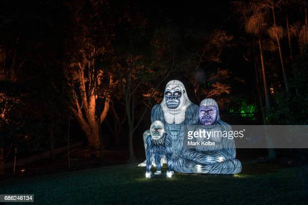 The Gorillagram installation one of the giant illuminated animal sculptures on display at Taronga Zoo is seen during a media call ahead of Vivid...