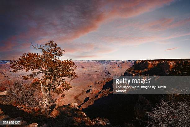 the grandest of canyons - dustin abbott stock pictures, royalty-free photos & images