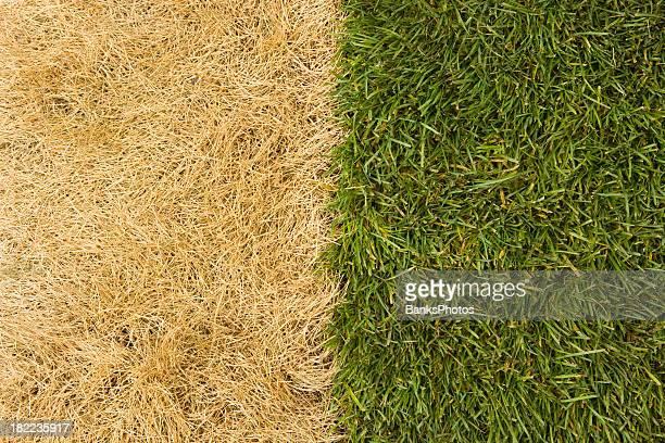 La hierba es más verde en el otro lado
