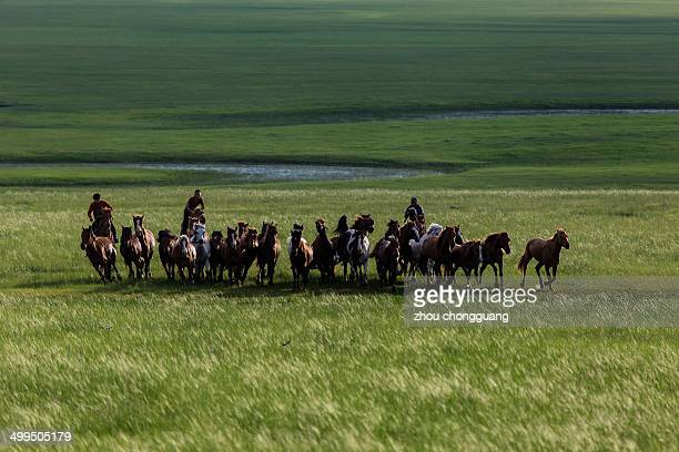 CONTENT] The grassland of Hulunbuir horses and wrangler running horses