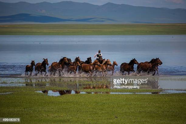 CONTENT] The grassland of Hulunbuir many horses scampered in the ford of grassland