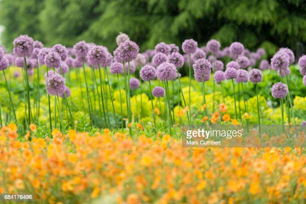 The Great Broad Walk Borders at Kew Gardens which Prince Charles Prince of Wales viewed on May 17 2017 in London England