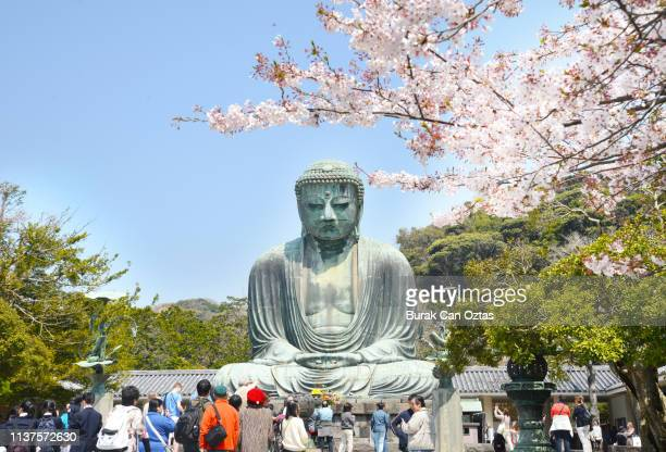 the great buddha of kamakura - kanagawa prefecture stock pictures, royalty-free photos & images