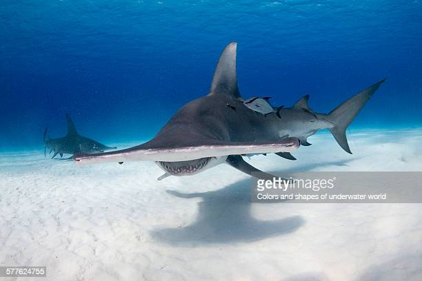 the great - south bimini stock photos and pictures