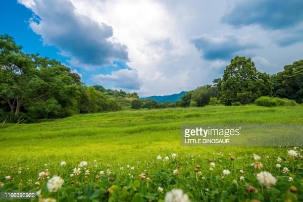 the green hill. asuka, nara, japan - 丘 ストックフォトと画像