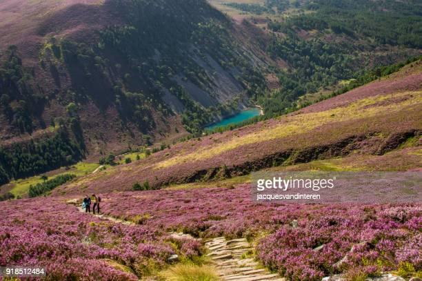 el lago verde en el parque nacional de cairngorms, escocia - parque nacional fotografías e imágenes de stock