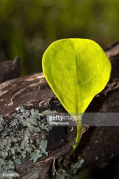 the green shows the force of nature. - crmacedonio imagens e fotografias de stock