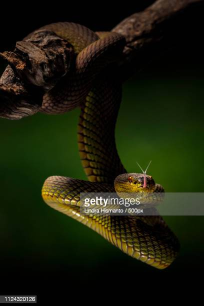 the green snake - black snake stock pictures, royalty-free photos & images