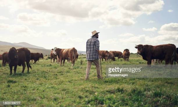 the greener the grass, the more they graze - female animal stock pictures, royalty-free photos & images