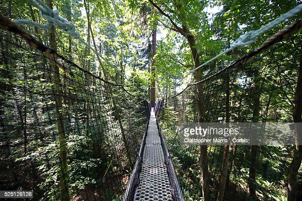 The Greenheart Canopy Walkway at UBC Botanical Garden on the campus of the University of British Columbia. The elevated walkway is a tour through the...