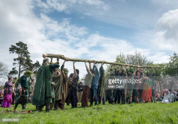 The Greenmen of Glastonbury carry this year's Maypole to a ceremony at Bushy Combe below Glastonbury Tor as part of the town's Beltane May Day...