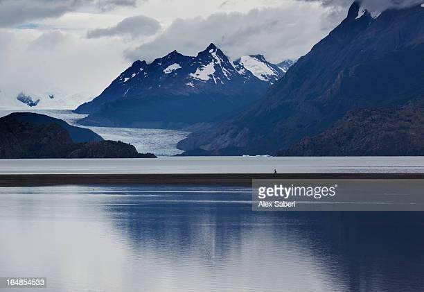 the grey glacier and lake grey in torres de paine national park. - alex saberi foto e immagini stock