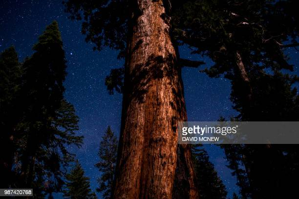 The Grizzly Giant sequoia tree is seen under a starry sky in the Mariposa Grove of Giant Sequoias on May 21 2018 in Yosemite National Park California...