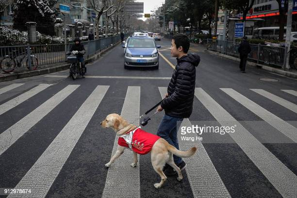 The Guide dog Leinuo leads its master Zongwenhao Walk street on January 26 2018 in Shanghai China February 16th 2018 is the Chinese lunar year of the...