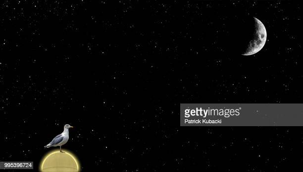 the gull and the moon - kubacki stock photos and pictures