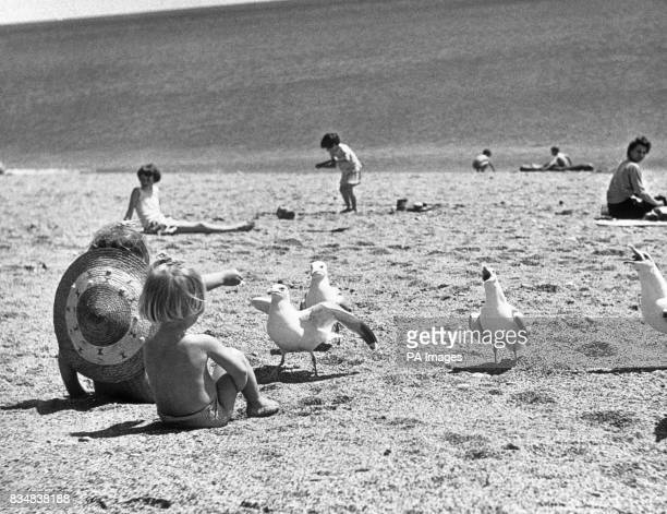 The gull who was knocked out of line voices a loud protest when his more thrustful companions are fed by these young holidaymakers on the beach at...