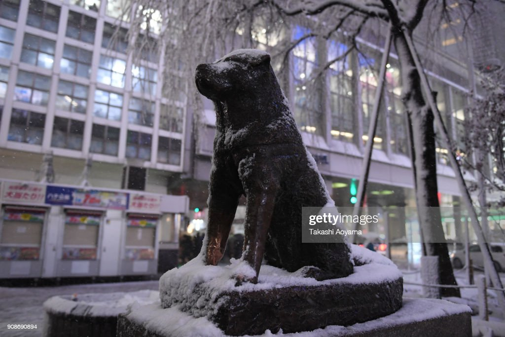 Tokyo Sees First Heavy Snow In Season : News Photo