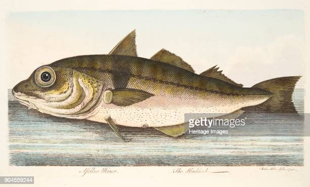 The Haddock from A Treatise on Fish and Fishponds pub 1832
