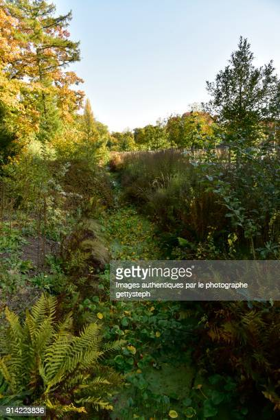 the half-drained brooklet with his varied vegetation in autumn under shadow - beautiful bare bottoms stock pictures, royalty-free photos & images