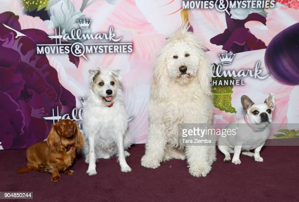 The Hallmark Channel dogs attend Hallmark Channel and Hallmark Movies and Mysteries Winter 2018 TCA Press Tour at Tournament House on January 13 2018...