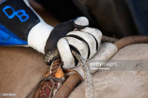 The hand of bull rider Dakota Beck as he grips the bull rope in the chute just before riding G Force at the Pendleton Roundup on September 13 2012 in...