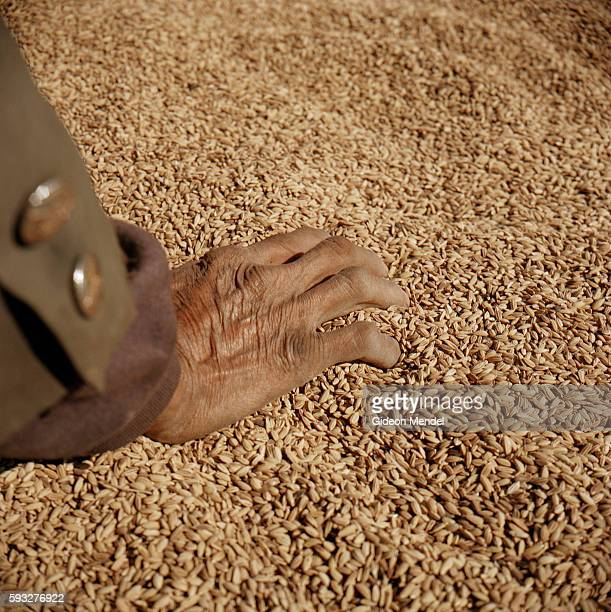 The hand of Locheu as he winnows his crop of rice on the balcony of his traditional Akha house in the Ban Nam Sa Akha village high up on a mountain...
