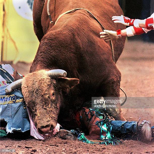The hands of a rodeo bullfighter reach in to help bull rider Josh O'Byrne of Glenrose Texas who is stuck under Viking after being thrown during the...