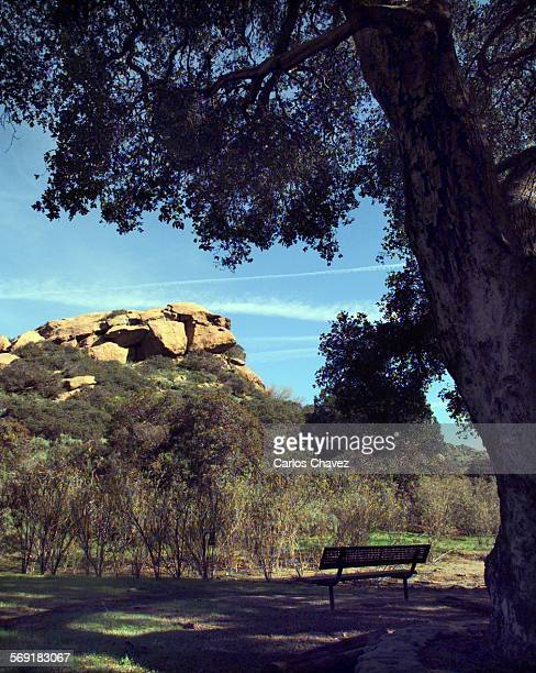 The Hanging Tree as named by movie makers in the western town of Corriganville still provides shade for visitor of the park in Simi Valley.