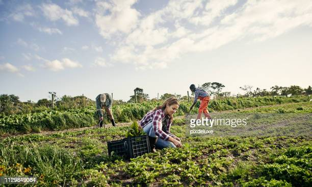 the hard worker receives a bountiful harvest - agricultural occupation stock pictures, royalty-free photos & images