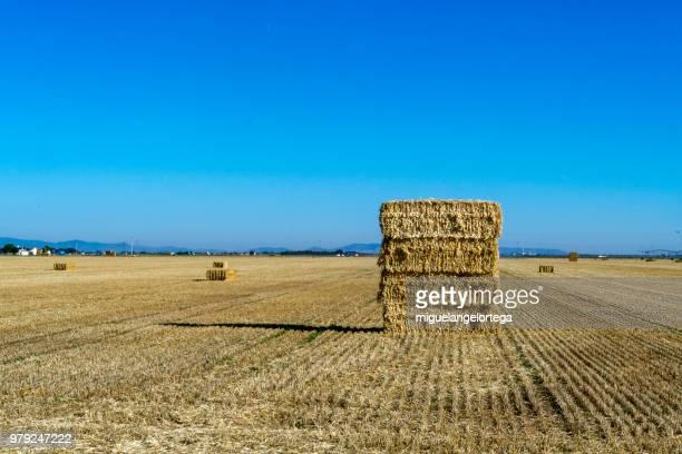 The harvest in La Mancha