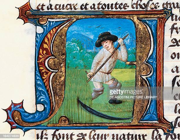 The harvest miniature from the Treaty of Medicine by Hildebrand from Florence manuscript Italy 14th century Lisbon Biblioteca Nacional