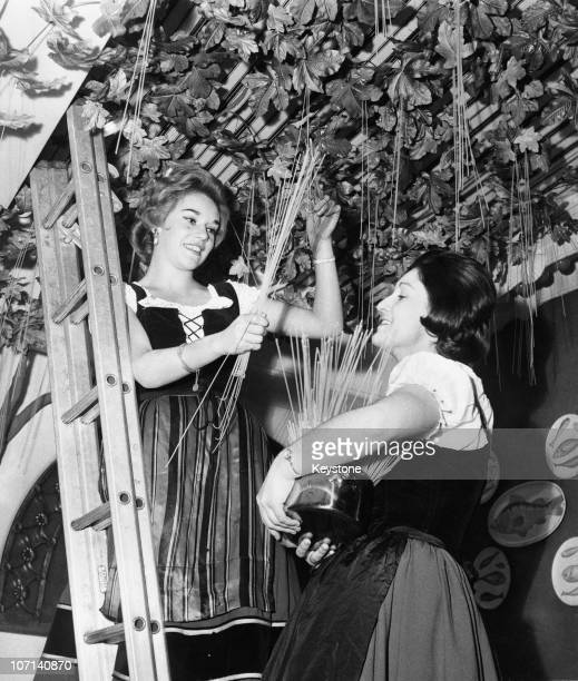 The harvesting of spaghetti from a 'vine' on the ceiling of Lo Spiedo, an Italian restaurant in central London, 22nd September 1961. The ceremony,...