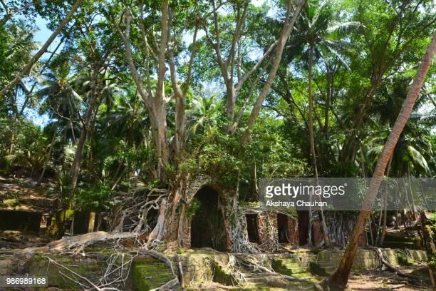 the haunted island - india summer fotografías e imágenes de stock