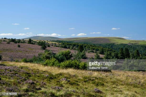 "the ""hautes chaumes"" of forez during heather blossom (august) - auvergne rhône alpes stock pictures, royalty-free photos & images"
