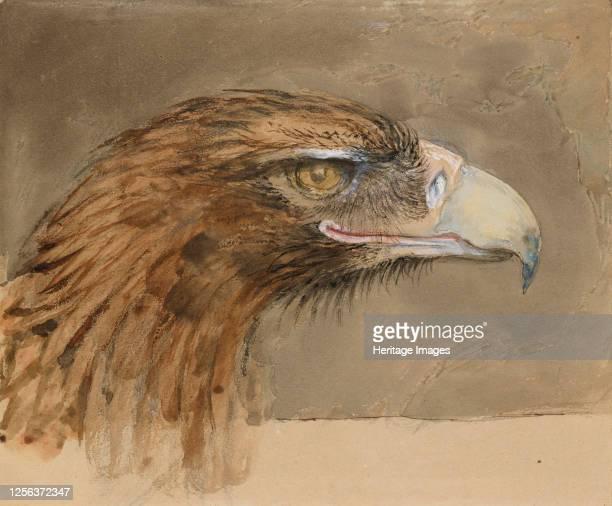 The Head of a common Golden Eagle from Life 8 11 September 1870 Artist John Ruskin