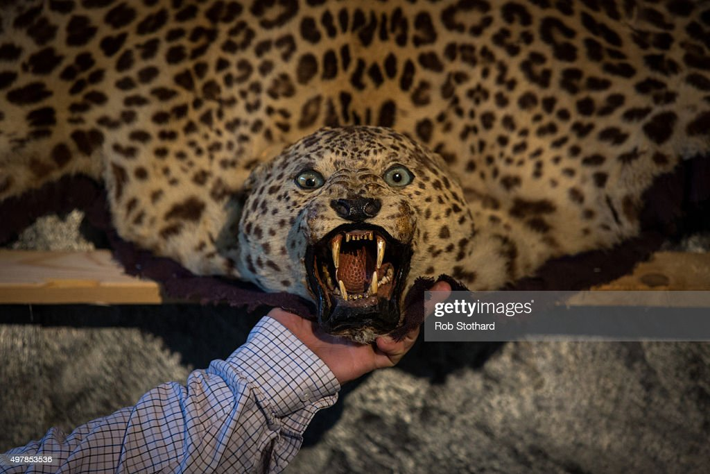The Head Of A Leopard Skin Rug